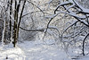 Winter's Beauty (A.Joseph Images) Tags: winter snow snowtrails d7200 nikkor70200f28 landscape hiver