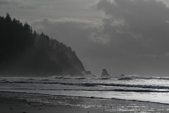 Cape Falcon (Tony Pulokas) Tags: oregon winter oswaldweststatepark capefalcon shortsandbeach sand beach ocean pacificocean surf seastack forest oldgrowth smugglerscove