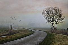 a foggy day (jacqaar) Tags: fog foggy day tree landscape road hek boom mist