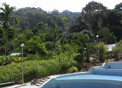 20060803_35 (Badly Drawn Dad) Tags: malaysia mys sabah geo:lat=604791212 poringhotsprings geo:lon=11670328438 geotagged poolside swimmingpool waterfun