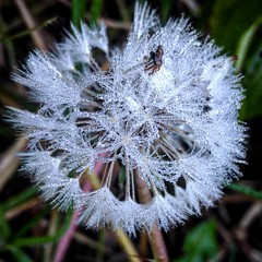 Nature's architecture (abhishekskumar) Tags: macrophotography macro ice cool naturelovers snow nature crystal white plant frosty