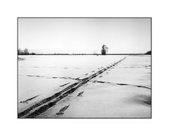 Snow tracks (cardijo) Tags: austria österreich salzburg winter snow schnee landscape landschaft bw blackandwhite sw schwarzweis analog film kodak trix rodinal bronica zenzanon 40mm etrsi