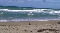 WP_20161124_13_33_18_Pro (sheryl chapman photography) Tags: floridabeach sea ocean tropics