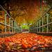 Leaf Strewn Path