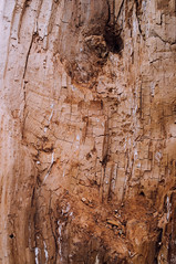 (Lydia Mantler) Tags: abstract tree fuji bauchnabel baum x100