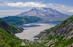 Mount Saint Helens , Norway Pass. (Andrew Behr) Tags: travel nature landscape volcano washington scenery scenic cascade cascaderange mountsainthelens spiritlake norwaypass