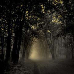 Toward the Light (William Flowers) Tags: road trees light fog glow memories dreams