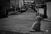Waiting (Kios Photography) Tags: naturaleza nature oaxaca sierrajuarez fotografo ecoturismo sierranorte ixtlan ixtlandejuarez ecoturixtlan kiosgarcia kiosphotography