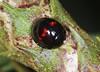 Heather Ladybird (Prank F) Tags: insect macro closeup beetle ladybird ladybug rspb thelodge sandy bedfordshireuk wildlife nature heather