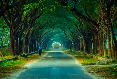 Road to Heaven (MashrikFaiyaz) Tags: landscape outdoor forest serene people vehicle natural nature beauty beautiful green tree trees leaves road street view scenery winter foggy december asia dhaka bangladesh nikon d5300 photowalk photography outing colors colorful sky