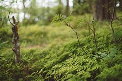 (DrowsyPotato) Tags: sony ilce7rm2 nature leaves leaf green summer greenary explore discover a7rii mark ii mk2 mkii alpha trees tree tones
