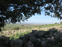 Overhanging tree and landscape from ruins of Volubilis, Morocco (Paul McClure DC) Tags: morocco almaghrib fèsmeknèsregion volubilis jan2017 roman architecture historic scenery