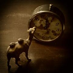 Happy New Year! (EssGee Photography™) Tags: lumixdmcfz150 humor humorous camel claracamel color stilllife digital fineart clock