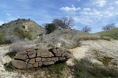 Split sandstone boulder with Caloplaca sp. lichen growing in the cracks (openspacer) Tags: caloplaca lichen lospadresnationalforest montereycounty rock sandstone