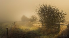 Misty morning (AnthonyCNeill) Tags: landscape panorama pano vista view outdoor nature campo tree trees grass fog mist misty atmosphere atmospheric dappled light shade shadows fence path sky nikon d750 zoom lens 70200mm belle beautiful atmosphère mood moody image imagen picture photo photograph photography lovely scene scenary scenic winter wintry cold morning countryside country field color colour british britain paisaje