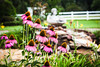 Warm Thoughts of You (oliemackeral) Tags: cone flowers bumble bee happy fence friday statue water pond day lilly buds 2016 rocks
