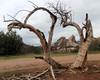 013 A Dead Tree (saschmitz_earthlink_net) Tags: 2017 california orienteering vasquezrocks aguadulce losangelescounty laoc losangelesorienteeringclub