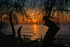through the branches (dim.pagiantzas | photography) Tags: branches trees nature sky sunset colors colorfull sea seascape seaside landscape light reflections sun outdoor sony serenity summer