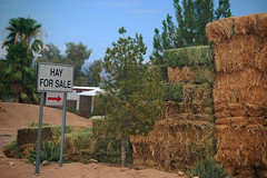 Hay For Sale (~ Lone Wadi ~) Tags: florencearizona arizonastatepenitentiary prison prisonfarm hay agriculture farming pinalcounty sign americansouthwest