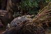 Smile (hey its k) Tags: costarica crocodile nature wildlife provinciadeguanacaste cr img9225e paloverdenationalpark riverboat canon6d tamron 150600mm