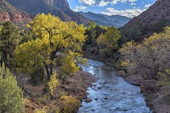 *Virgin River @ Fall* (albert.wirtz) Tags: albertwirtz usa unitedstates america amerika vereinigtestaaten utah virginriver springdale zion zionnp zionnationalpark nationalparkusa utah9 brücke bridge cottonwoodtree herbst fall autumn water reflection spiegelung gelb yellow turningleaves laubfärbung mountcarmelhighway zionmountcarmelhwy