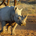 DSC09782 - NAMIBIA 2013