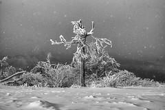 Solitude (pwendeler) Tags: winterforest winter winterlandscape winterlandschaft winterwald schnee schneelandschaft snow hessen hesse germany feldberg landschaft landscape sony