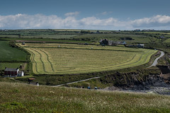 Making hay over Abereiddy (John_sarn) Tags: farming hay