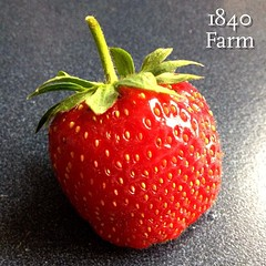 "If you subscribe to our 1840 Farm Community Newsletter, then you've already received our Strawberry Season Issue in your inbox this morning.  It's filled with eight of my family's favorite recipes that highlight the delicious flavor of ripe strawberries. • <a style=""font-size:0.8em;"" href=""http://www.flickr.com/photos/54958436@N05/18774550609/"" target=""_blank"">View on Flickr</a>"