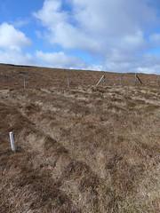Ceide Fields029