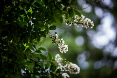 Checking the weather (Robbybeggs) Tags: green dof bokeh outdoor rob greenery beggs 6d 135l