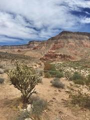 Desert... Love it (venticello.giulia) Tags: love nature escape desert dry nobody land deserto