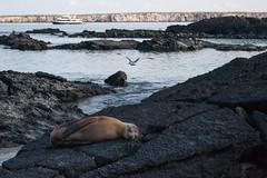 A Galapagos Scene (Heather Valey) Tags: ocean sea beach ship seagull equador darwins rockyshore galapagosislands genovesa canonrebelxti darwinsbeach