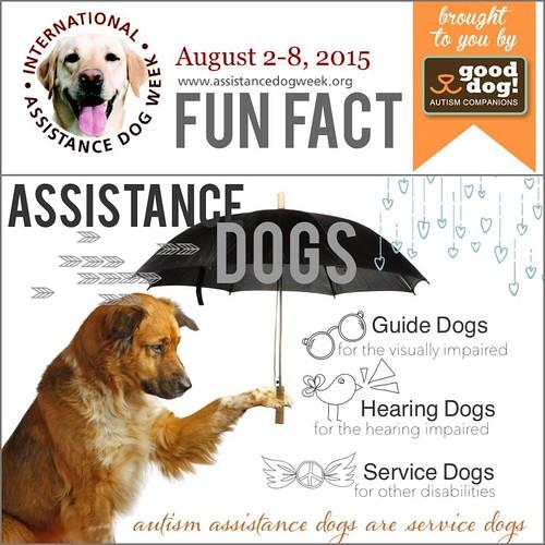 dog animal servicedog guidedog hearingdog internationalassistancedogweek gooddogautismcompanions