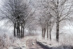 Winter Way (Tony Gill) Tags: winter trees frost mist cold lane dorset