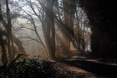 (R:v) Tags: france français finistère forest fog brouillard brume exterieur color light lightline sun sunlight landscape misty ciel campagne rayon