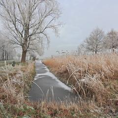 Haarlem in winter (bugman11) Tags: winter ice tree trees landscape haarlem nikon nederland thenetherlands nature flora 1001nightsmagiccity 1001nights thegalaxy platinumheartaward contactgroups infinitexposure