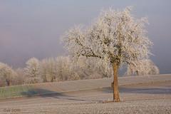 non-reduced landscape (leaving-the-moon) Tags: 2016 201612 baden bäume deutschland germany goodlight kraichgau landscape landschaft raureif sweethome trees whitefrost winter wood