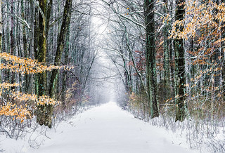 Thru the road to winter.