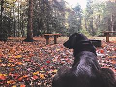 Cortana Camping (Tony Webster) Tags: canada cortana autumn campground camping fall saultstemarie ontario ca