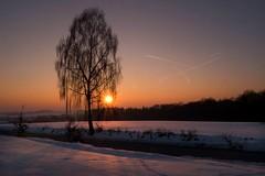 Endlich eine Wintersonne (fuchs_ernst) Tags: panasonic weitwinkel sonne schnee baum bayern