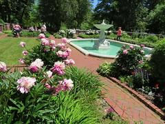 Peonies & Fountain (pirate johnny) Tags: glensheen duluth mansion minnesota flowers garden