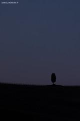 Single and lonely (Daniel Moreira) Tags: san quirico d orcia toscana tuscany italia italy itália cypress cipreste dusk anoitecer