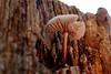 365 - Image 18 - Mushroom... (Gary Neville) Tags: 365 365images photoaday 2017 sonycybershotrx100 sony sonycybershotrx100v rx100 rx100v v mk5 garyneville