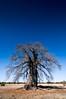 BOLD, Bolder, Boldest 1 (Alec Lux) Tags: botswana makgadikgadi baobab blue bold bolder boldest dry landscape nature saltpan savannah sky thick tree