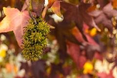04 (AdrianSanzBer) Tags: nature naturaleza madrid parque otoño autumn hojas leaves trees