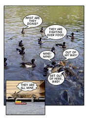comic 03 (hamapenguin) Tags: fish bird water cat duck  pond comic comiclife carp neko  straycat