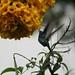 Beija-flor 2047 - 5