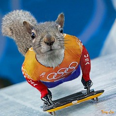 Skeleton Racing (Terry_Lea) Tags: drag squirrel squirrels olympics photoshopfun headfirst animalolympics tbas