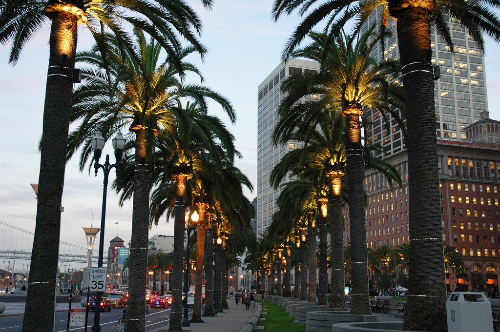 Palm Trees in Los Angeles California Palm Tree Lined Street